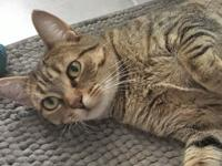 Charlotte is a 2 yr old kitty looking for a new start