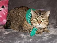 Charly's story Charly is a female gray tabby who is 3