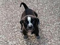 Charmeine $400's story Charmeine is a pup who loves to