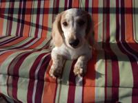 $450. Charming is an ee red piebald. He is 4 months old