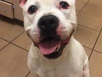 Chase is a 3 year old American Bulldog mix who came to