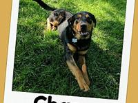 CHASE's story Hi! My name is Chase! Im so excited about