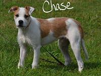 Chase's story Chase is a loving puppy looking for a
