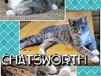 Chatsworth's story This is Chatsworth. He is about a