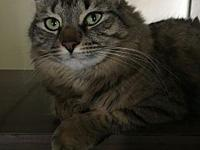 Chauncey's story Chauncey is a 4 yr old kitty whose