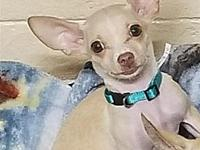 Chavo's story Chavo is a very happy and loving little