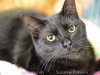 My story Hi, I'm Chaz. I am a young, affectionate,