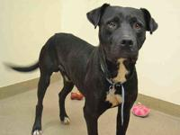CHECKERS's story I`m a quiet boy that is content with