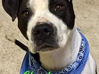 CHECKERS's story CHECKERS (#15974) - Checkers (male) is