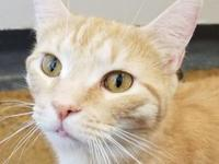 Cheddar 24303-c's story Hello, my name is Cheddar. I'm