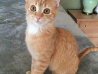 Hi! My name is Cheddar! I love other kitties, and