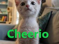 Cheerio's story Born 5/11/2018 Our adoption fee is $125