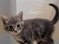 Cheerio's story Visit this organization's web site to