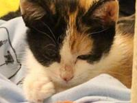 Cheese's story Cheese is an adorable calico who enjoys