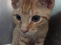 Cheeto's story He is waiting to be adopted at the