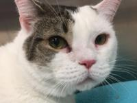 CHELL #180121 - Chell is a very sweet and docile 5 year