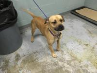 Chelly is a beautiful little girl who is bonded with