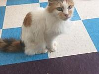 Chelsey's story Chelsey Calico DOB 4/25/2005 Chelsey is