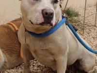Cher's story !!!Available for Adoption at ACCT
