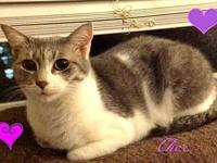 Cher-female-'s story  Cher is a sweet and loving