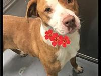 Cherry - 092 / 2018's story Please contact Maumelle