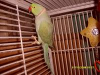 FREE BEAUTIFUL CHERRY HEAD COnure, non plucker with