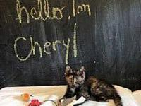 Cheryl's story Cheryl is currently in a foster home