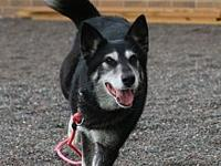 Chessie's story Chessie is a black and silver Alaskan