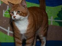 Chester's story Chester is a lovebug with the loudest