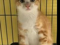 Chester's story I am a 3 month old kitten and I am
