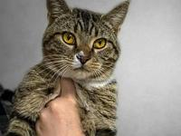Chester's story Chester is a 9-month-old DSH with