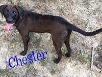 Chester's story Please understand we must conduct home