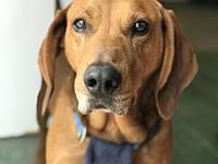 Chester's story Chester RB Hound is an easygoing,