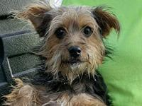 Chester's story Meet Chester, a 2 year old, 7,