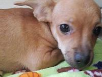 Chestnut's story At Wags and Whisker's Pet Rescue:
