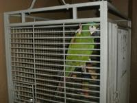 Macaw for sale or trade with 2 cages. Cricket talks, no