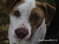 *CHET's story Chet has tested positive for heartworm