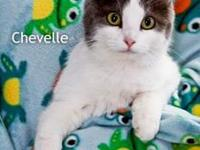 Chevelle's story I'm Chevelle! I came to CVHS as a
