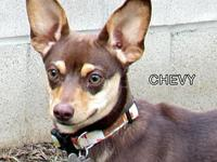 Chevy's story You can fill out an adoption application