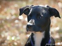 Chevy's story What a pup! Friendly and outgoing,