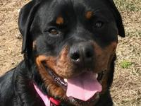 Calling all Rottie lovers! If you love the breed, you
