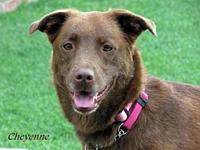 Cheyenne's story Do you want to adopt me?  Just go