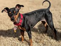 Cheyenne's story Cheyenne is a 3-year-old, black & tan,