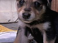 My story These wonderful little orphan puppies were