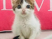 Chi Chi's story Chi Chi is a special special kitten. At