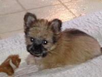 Cute little girl. Under 5 lbs as adult. Up to date on