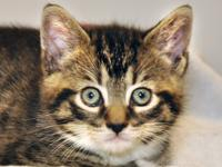 Chianti is an adorable tabby that came to WOTNVR with