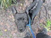 Chibs's story Chibs found us! He jumped into the car of