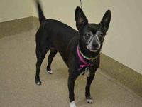 CHICA's story If you`re looking for a lap dog, look no