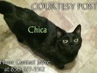 Chica's story You can fill out an adoption application